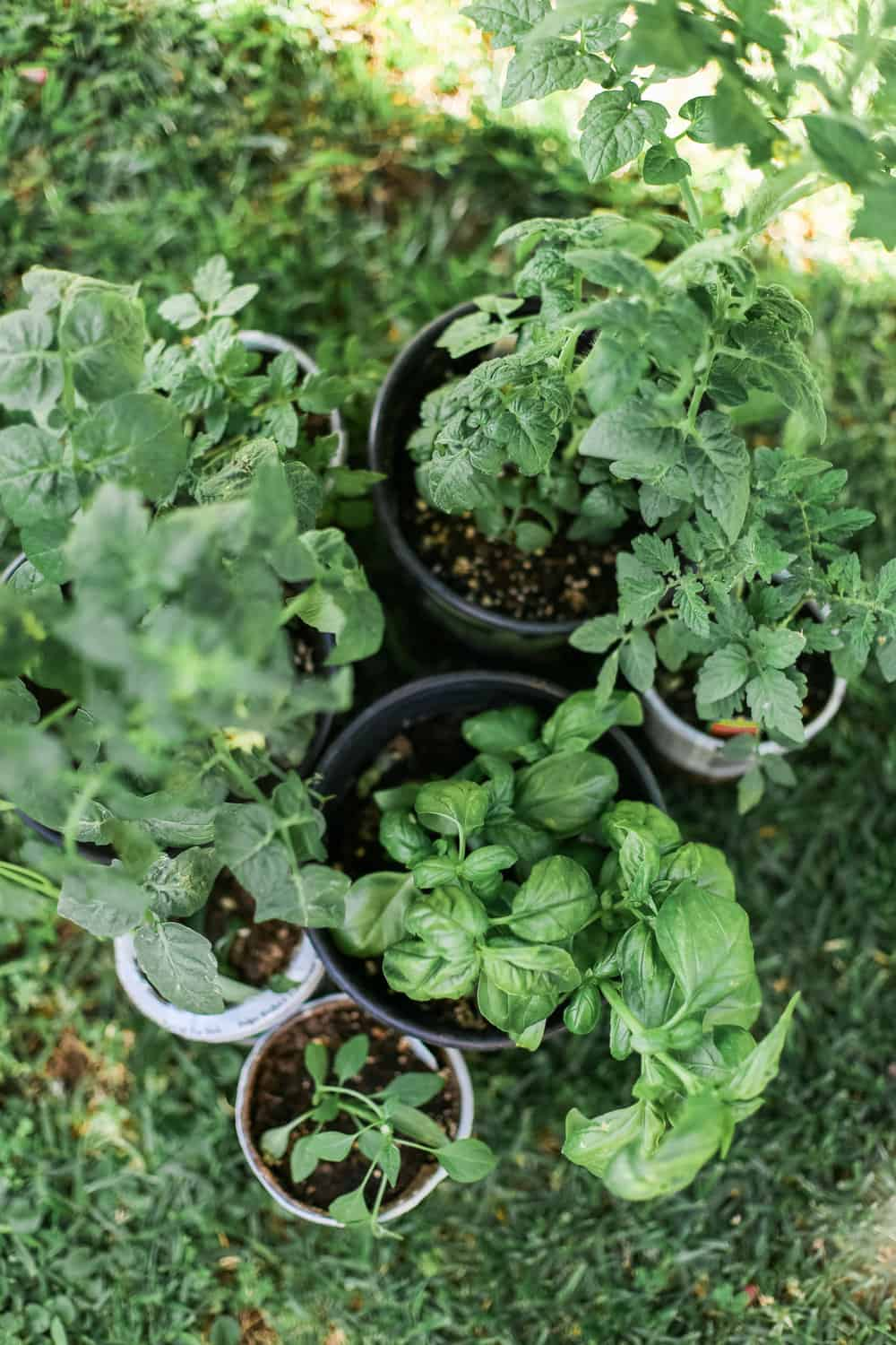 DIY Wooden Herb Garden Planters for less than $100! - College Housewife