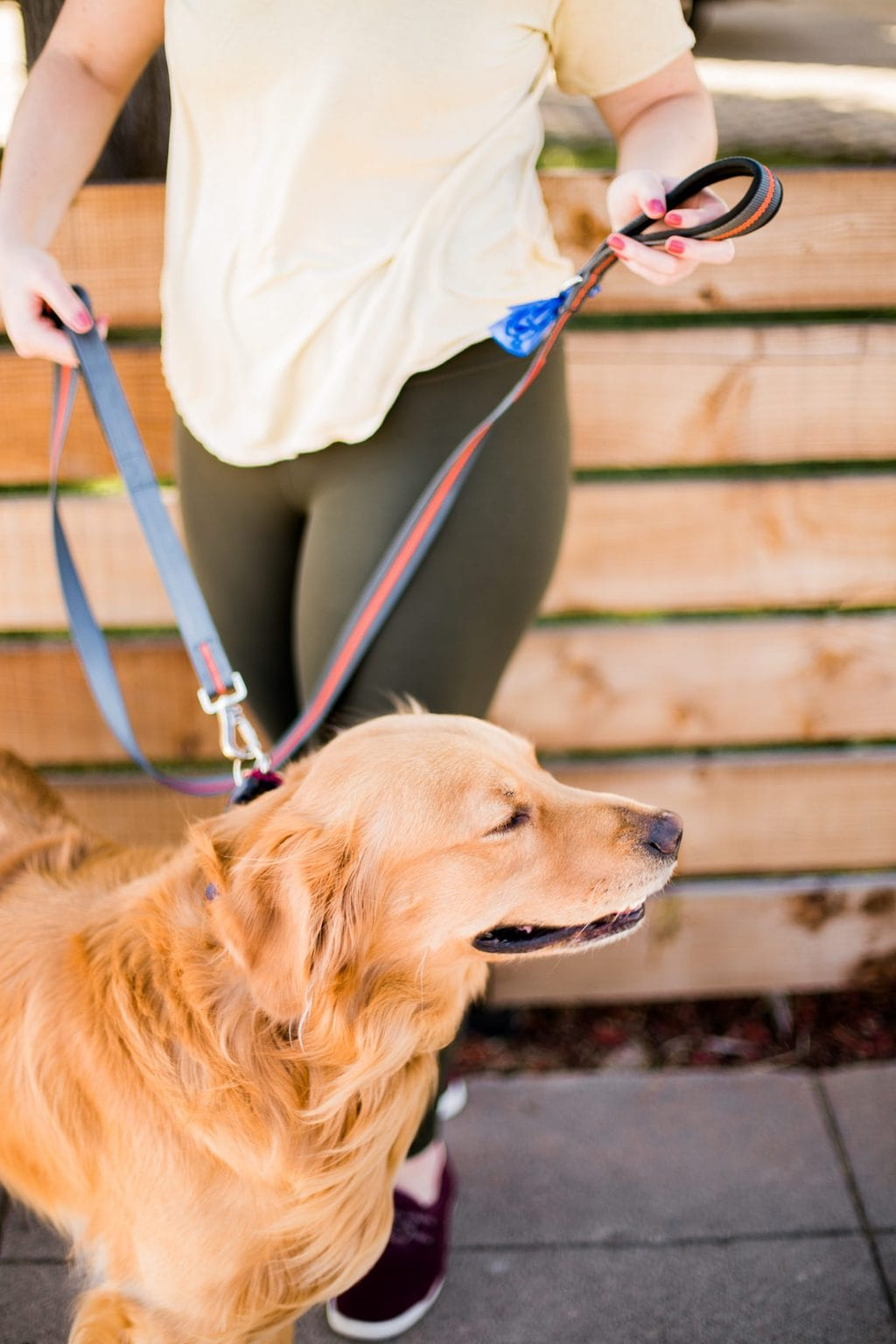 A golden retriever puppy outside being walked with a leash and his owner.