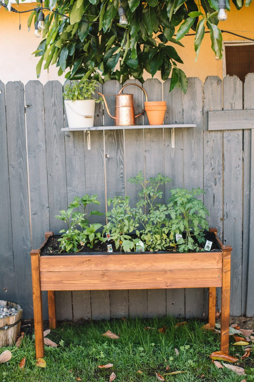 A raised herb garden planter with tomatoes planted inside.