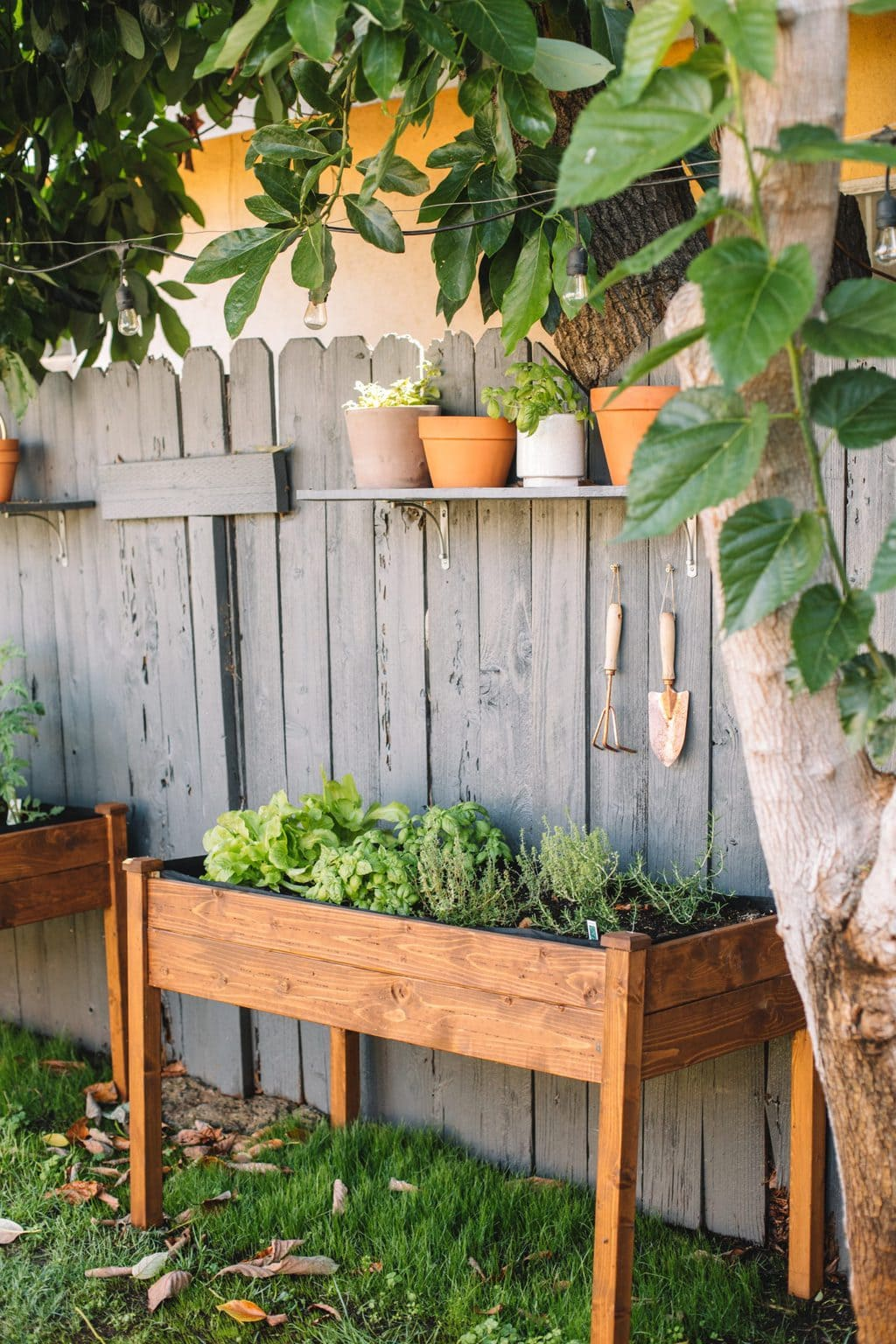 Two raised wooden planters with herbs and lettuce inside.