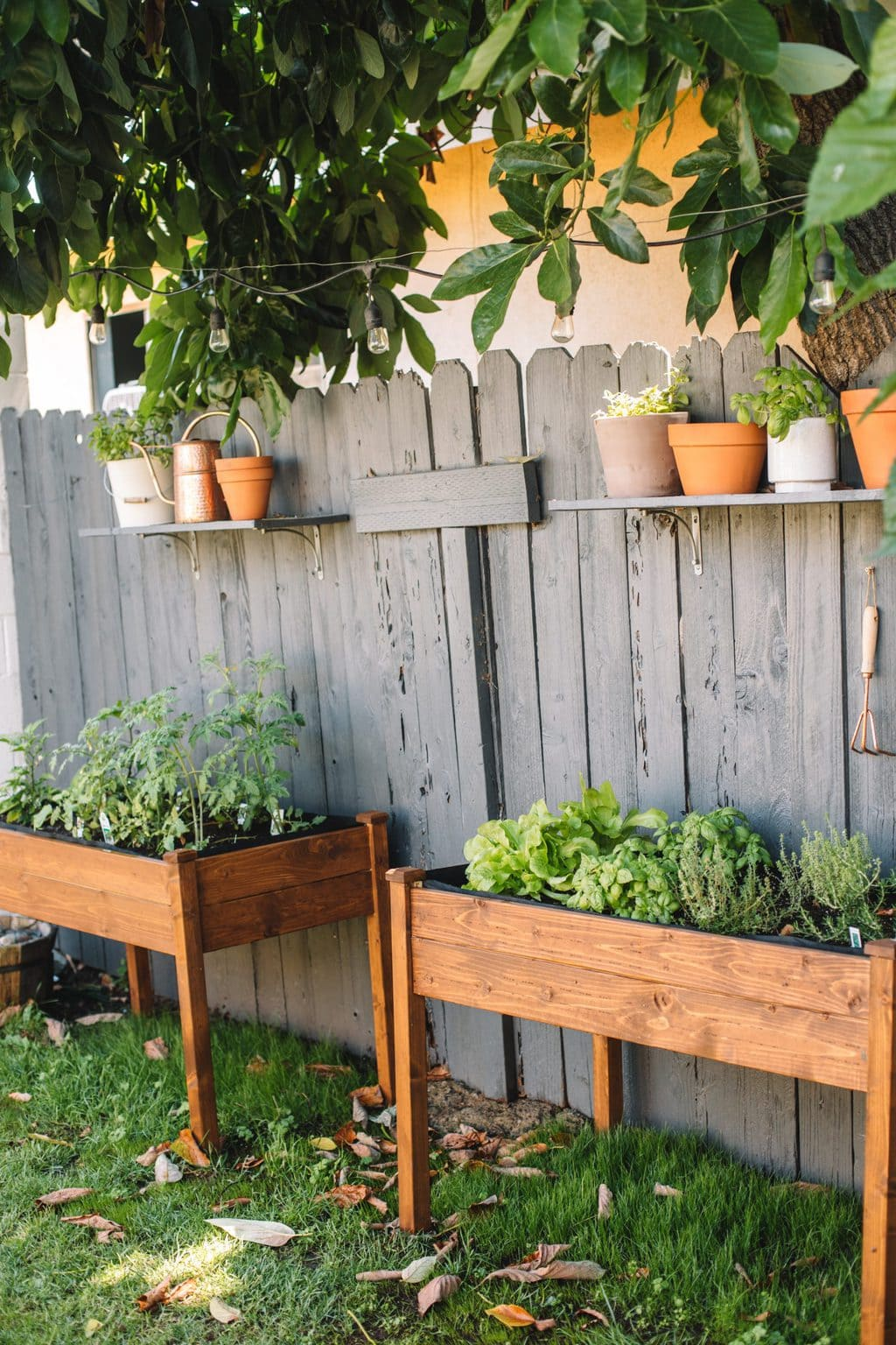 Two raised herb garden planters with herbs and tomatoes planted inside.