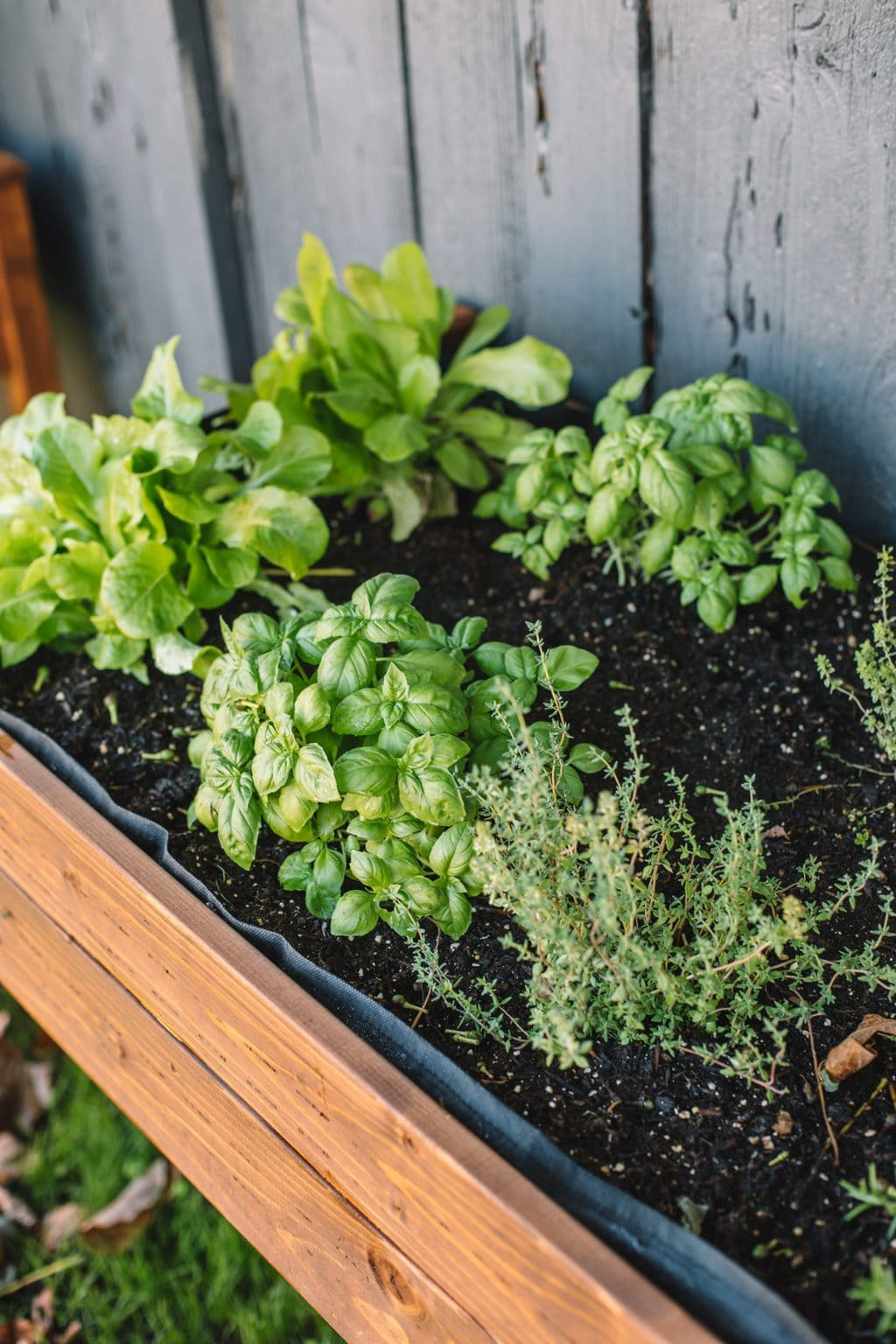 Lettuce, basil and thyme planted in an upright planter.